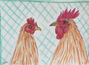 My hen and rooster