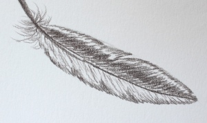 my feather drawing