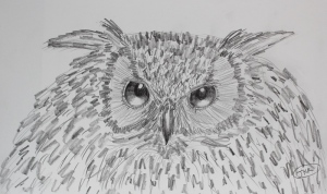 My owl sketch