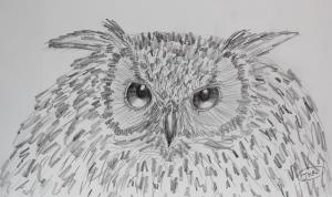 My owl sketch