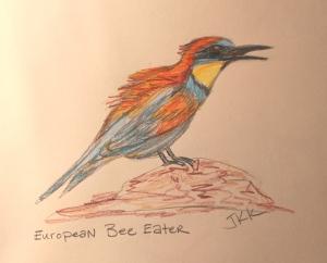 bee eater bird in color pencil
