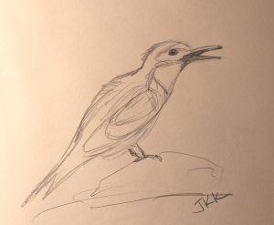 bee eater bird sketch in pencil