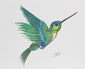 Hummingbird in color pencil