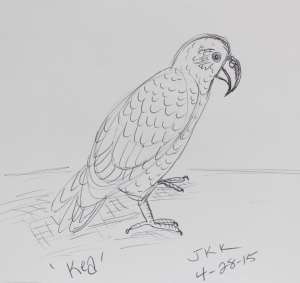 Kea bird sketch