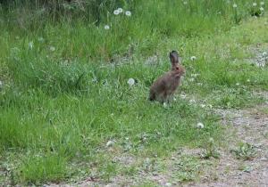 Bunny pic 1