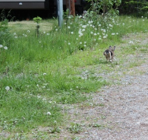 Bunny pic 3 - leaving