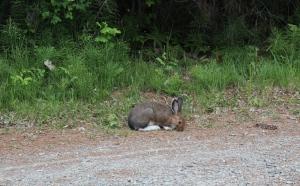 Bunny pic 4
