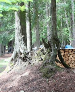 fairy tree dwelling 3