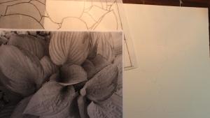 Hosta sketch - 1
