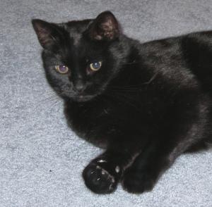 Jack cat 2009