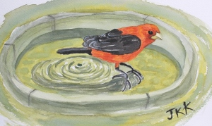 Scarlet Tanager watercolor completed