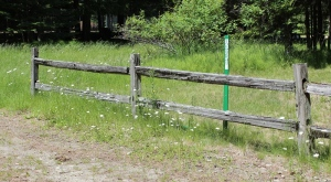 fence post and daisies