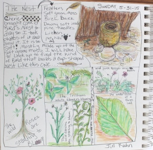 Journal - Nature drawings on May 31st