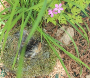 pink forget me nots and nest