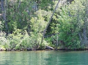 Rope Swing at lake
