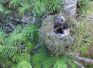the nest in a tree photo