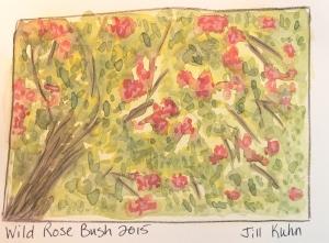 wild rose bush in watercolors - loose