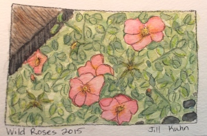wild rose watercolor from photo
