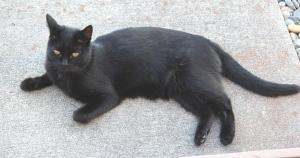 Jack cat