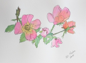 rose watercolor better photo