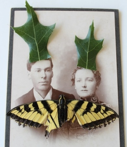 The Swallowtails lived on Oak Street