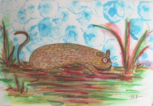 zucc rodent
