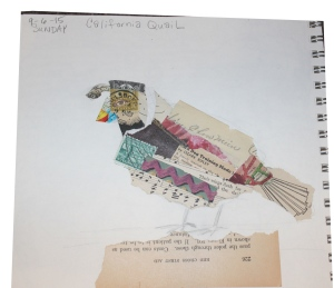 CA Quail - step 2 collage papers