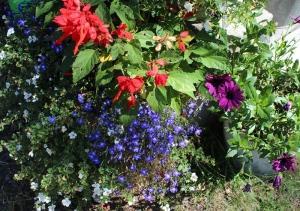 my flowers 2013