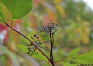 upclose of bush by John & Sue - 2