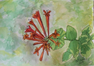 Watercolor Honeysuckle bloom