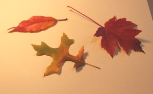 photo of 3 fall leaves