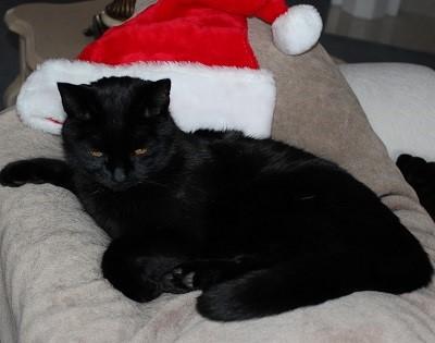 Jack with Santa hat