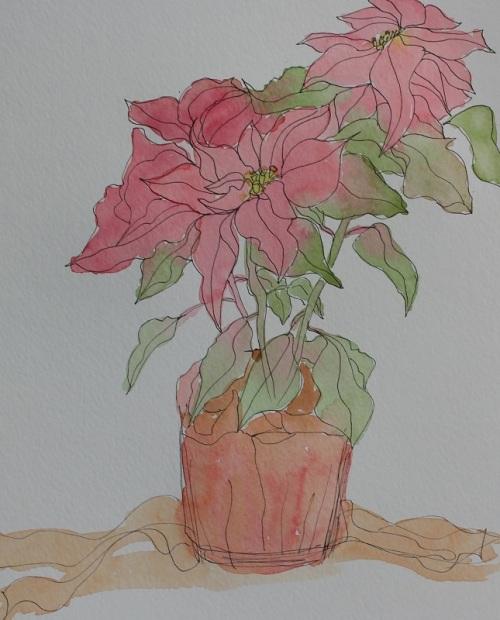 Poinsettia - 1