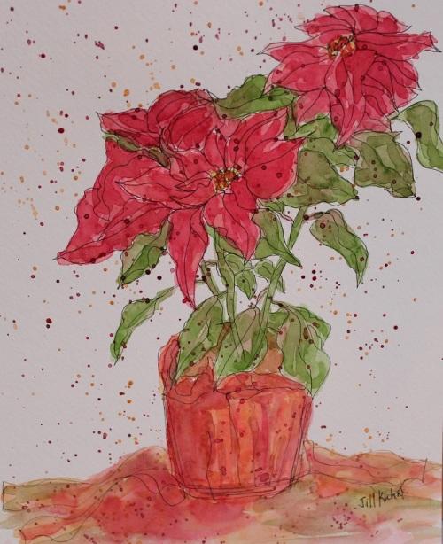 Poinsettia - 3